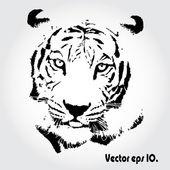 Tiger ritning — Stockfoto
