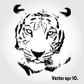 Tiger zeichnen — Stockfoto