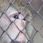 Monkey — Stock Photo #28923779