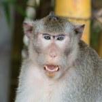 Monkey — Stock Photo #28925623