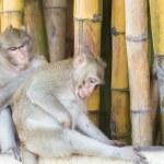 Monkey — Stock Photo #28925731