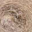 Stock Photo: Hay.