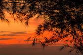 Çam — Stok fotoğraf
