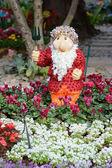 Chiangrai flora — Stock Photo