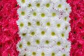 Flower — Zdjęcie stockowe