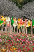 Flower — Foto de Stock
