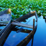 Barcos Pateira — Foto Stock