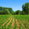Cultivated land — Stock Photo