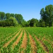 Cultivated land - Foto Stock