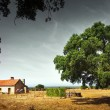 Little Rural House — Stock Photo