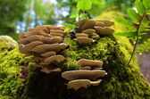 Forest Fungus — Stock Photo
