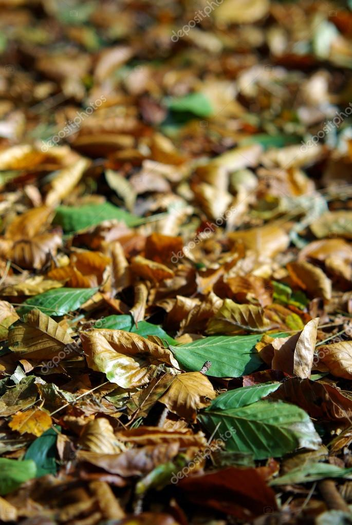 Seasonal background with lots of colorful fallen leafs in autumn  — Stock Photo #13387221