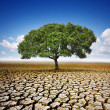 Tree On Dry Land - Stock Photo