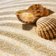 Seashell and Conch — Stock Photo