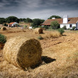 Stock Photo: Farmland