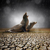Two seals under heavy rain — Stock Photo