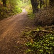 Stock Photo: Pathway in the Woods