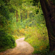 Pathway in the Woods — Foto de Stock