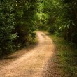 Pathway in the Woods — Stock Photo #33753215