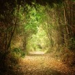 Pathway in the Woods — Stock Photo #33753249