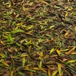 Fallen Leaves — Stock Photo #36698241