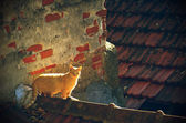 Stray Cat — Stock Photo