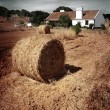 Hay roll — Stock Photo #48099883