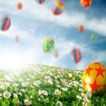 Eggs in Flower Field — Stock Photo #5875013
