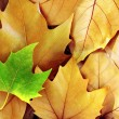 Dry Fall Leaves — Stock Photo #7478473