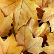 Dry Fall Leaves — Stock Photo #7609166