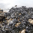 Mussels in the National Park in Ushuaia in Tierra del Fuego - Stock Photo