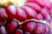 Pomegranate closeup — Stock Photo