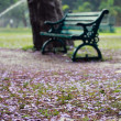Old chair at lalbagh botanical gardens, Bangalore, India — Stock Photo