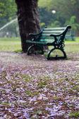 старый стул в форта лалбагх ботанический сад, бангалор, индия — Стоковое фото