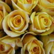 Stock Photo: Closeup of beautiful bright yellow Rose(Rosa) flower buds.
