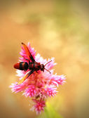 Honey bee pollinating flowers in a field of beautiful pink flowe — Stock Photo