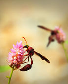 Brown wasps pollinating flowers in a field of beautiful pink flo — Stock Photo