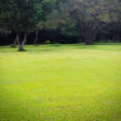 Beautiful bright green lawn & trees at lalbagh botanical gardens — Stock Photo #43339671