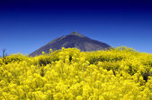 National Park Las Canadas del Teide, Tenerife — Stock Photo