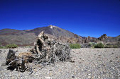 Teide 3718 m. in Tenerife, Canary Is. — Stock Photo