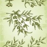 复古的橄榄枝 — 图库矢量图片 #12880114