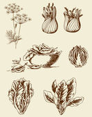 Vintage vegetables — Stock Vector