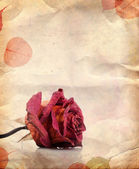Dried red rose and leaves — Stock Photo