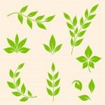 Green leaves — Stock Vector #35343571