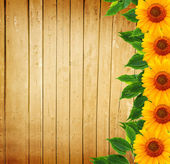 Wooden fence, green leaves and sunflowers — Stock Photo