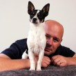 Man with pet chihuahua — Stock Photo #31341921