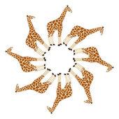 Giraffe in circle — Stock Vector