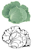 Stylized cabbage — Stock Vector