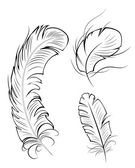 Three contour feathers — Wektor stockowy