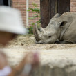 Rhino zoo — Stock Photo